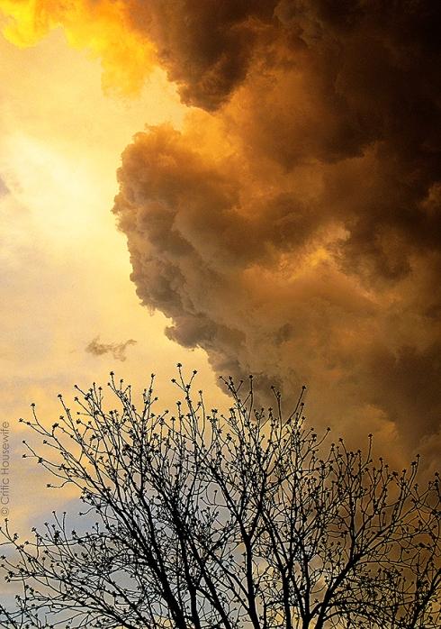 cloud tree_8478 ch blog